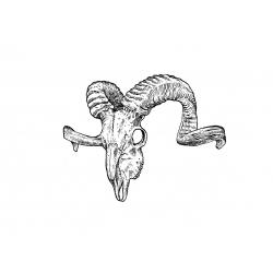 Kacper - wzór czaszka barana