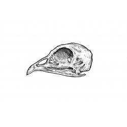 Kacper - wzór czaszka ptaka
