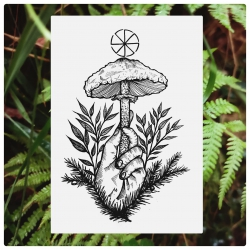 Dominik - wzór kania