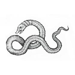 Kacper - wzór waąż